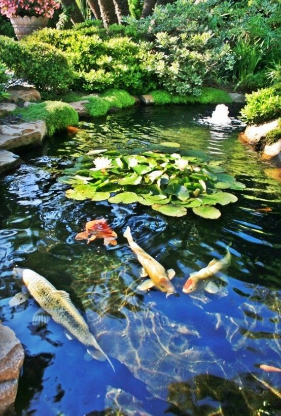 The five keys to achieving a healthy koi pond landscapes for Awesome koi ponds