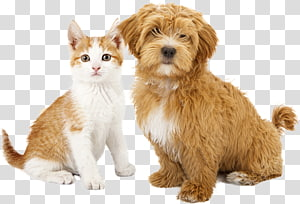Cat Dog Puppy Kitten Pet Sitting Cat Transparent Background Png Clipart Dogs And Puppies Tabby Cat Tabby Kitten