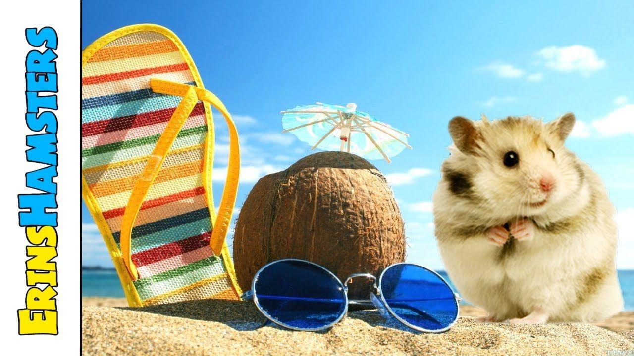 Keeping Hamsters cool in summer