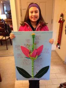 3d Flower Power Flower Science School Science Projects Plant Science