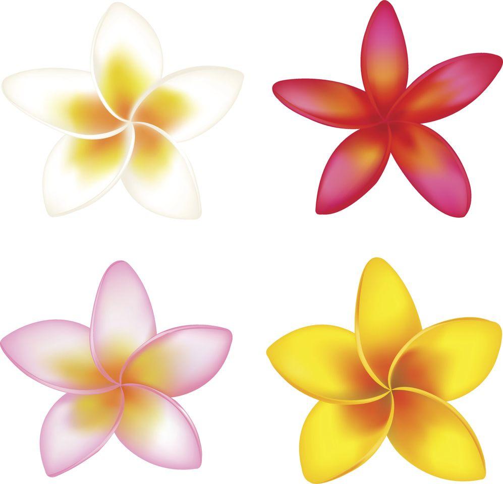Flor Desenho 5 Petalas Pesquisa Google Molde Flor Clip Art
