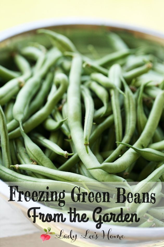 Freezing green beans from the garden. A quick and easy way to preserve green beans for the year. Here is a picture tutorial of how to freeze green beans.
