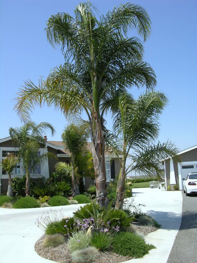 Explore M G's photos on Photobucket. | Queen palm tree ... on Backyard Landscaping Ideas With Palm Trees id=35625