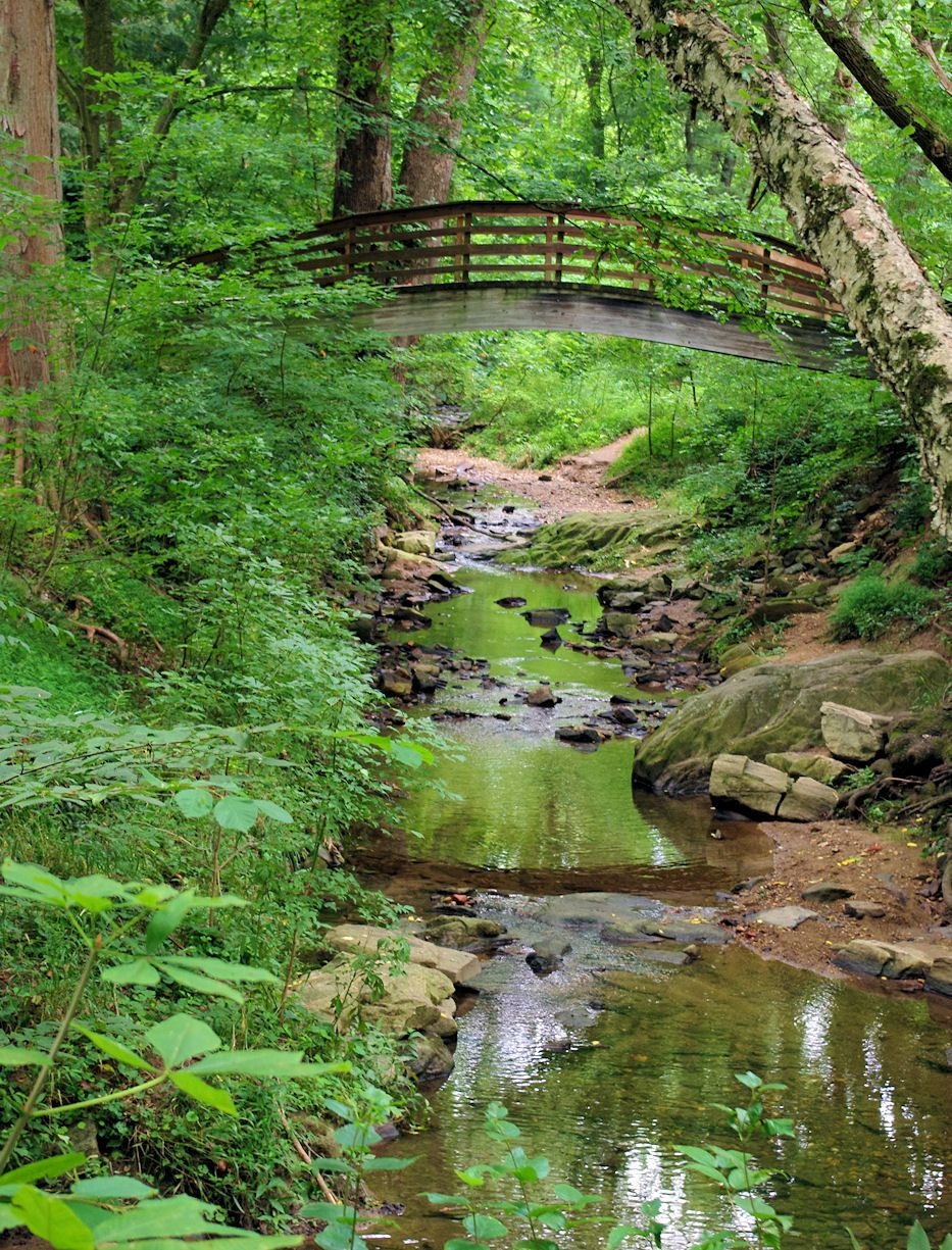Charmant Bridge At The Botanical Gardens Of Asheville, North Carolina