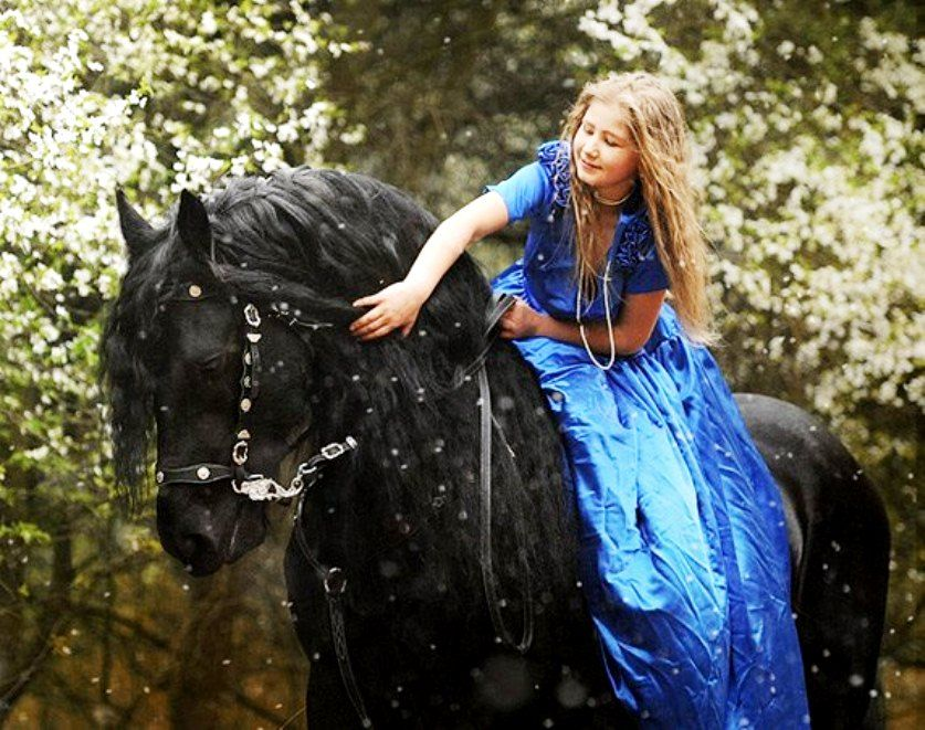 Girl Amp Her Black Horse Beautiful Mane Photography