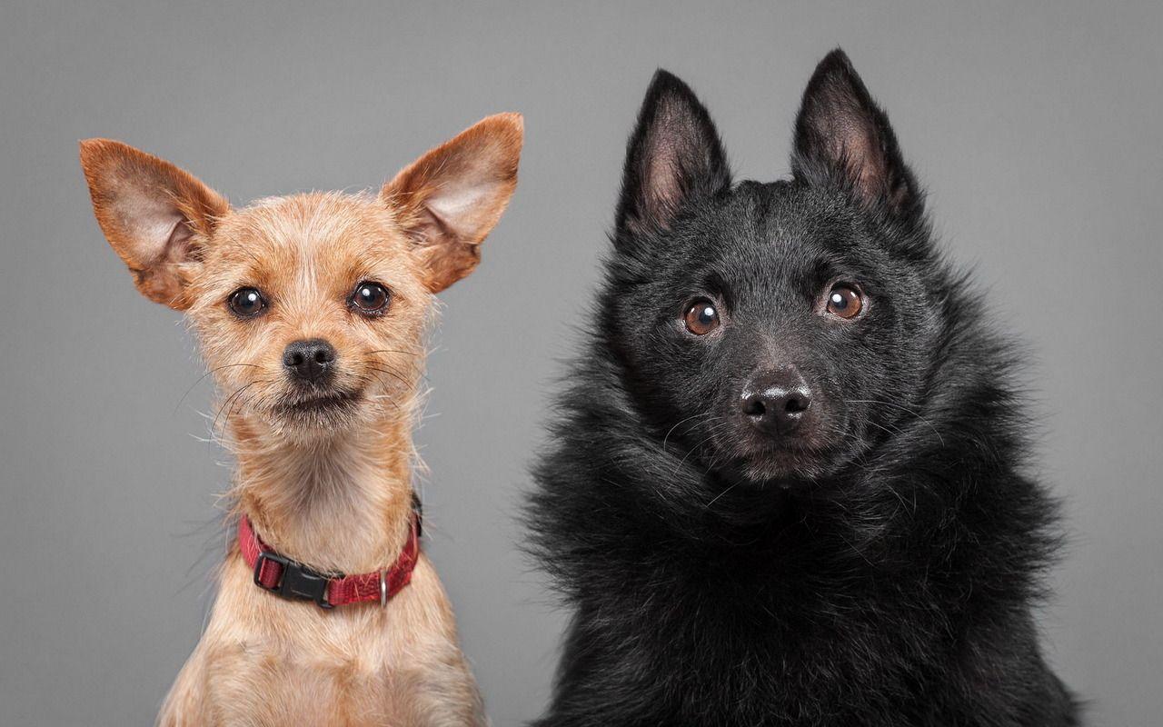 Cute dogs fauna pinterest dog wallpaper