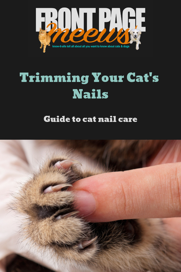 Trimming Your Cat S Nails The Quick Guide To Kitty Mani Pedis Cat Nails Trim Cat Nails Cat Health