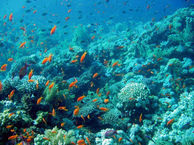 Underwater Landscape Ocean Best Vacations Bottom Of The Ocean