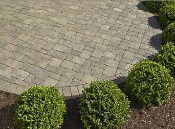 Concrete Patio Pavers With Ring Of Small Bushes