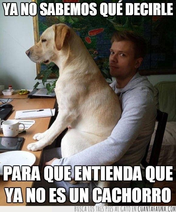 El Tipico Perro Que No Entiende Que Ha Crecido Funny Spanish Memes Best Memes Memes
