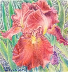 flowers paintings of iris - Bing Obrázky