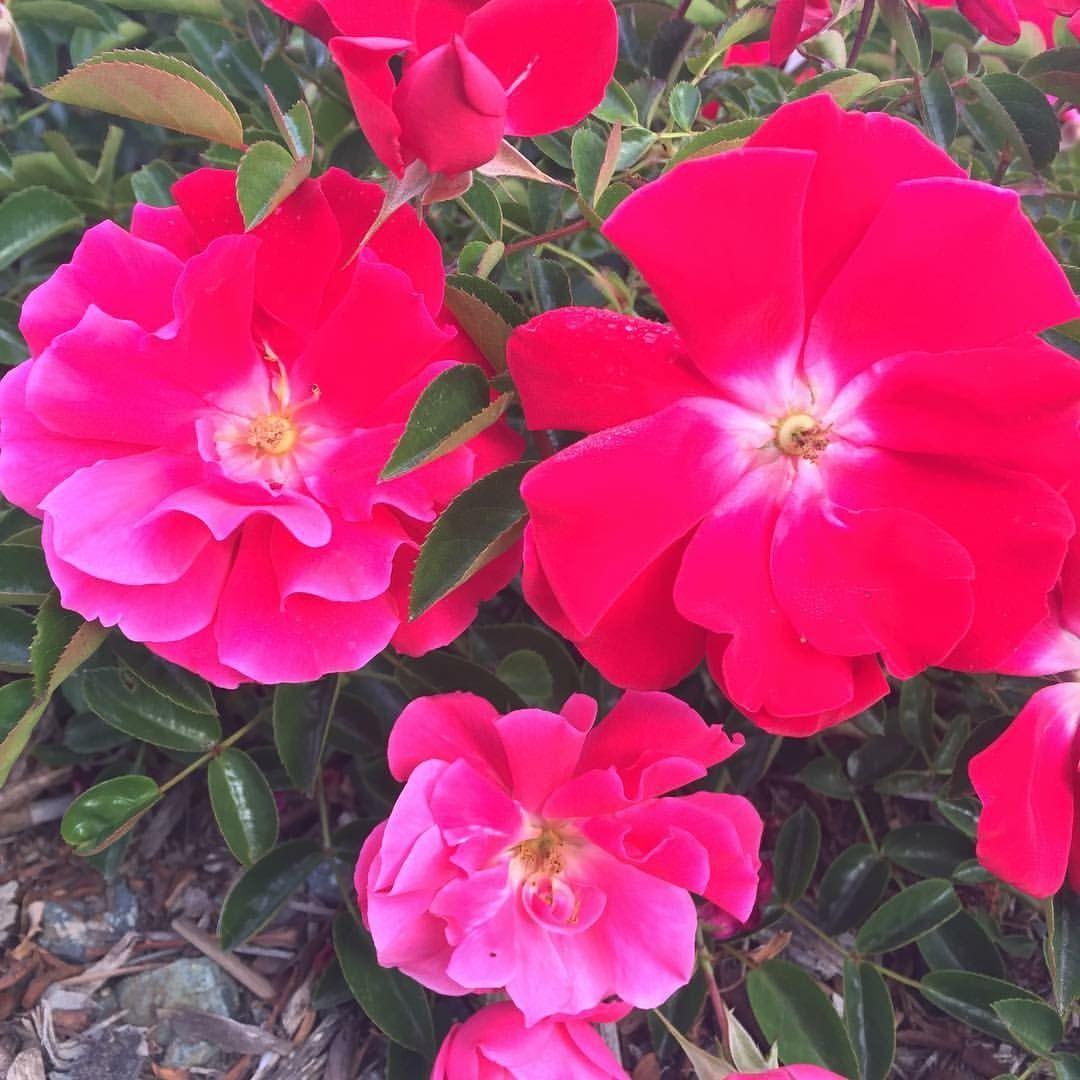 Radiant #Beauty ❤ ❤ #GlorytoGod #nature #perfect #true #beauty ...