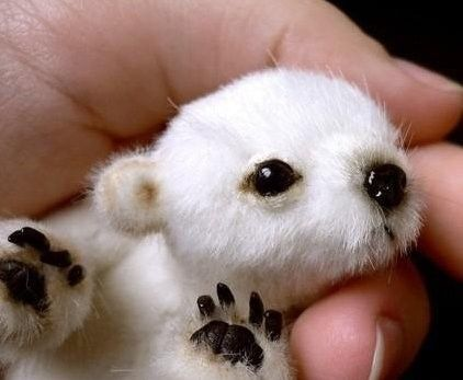 cute polar bear cub......so tiny!