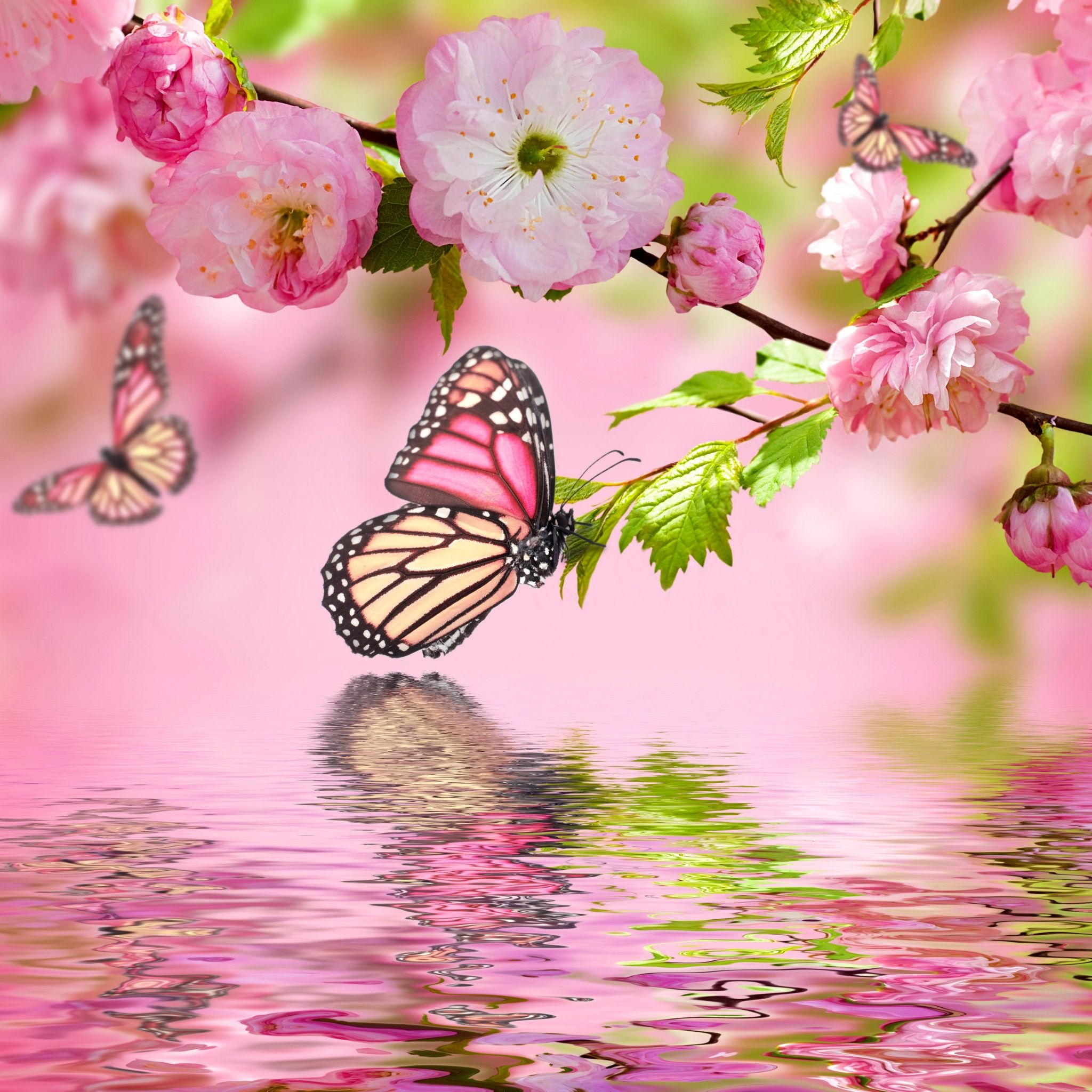 spring blosson with butterfly tap for more dreams of spring wallpapers for iphone android