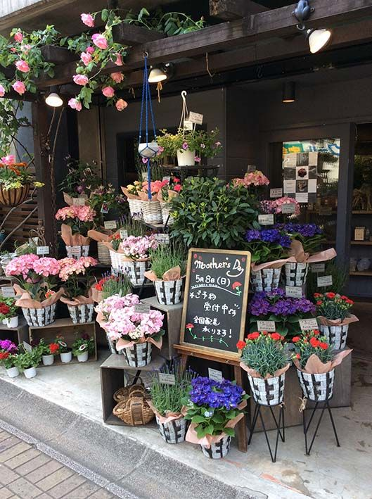 母の日のfiligrane(フィリグラン) シンボルツリーのスパニッシュビューティーが咲き誇る季節です。