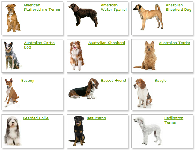 Small dog breeds chart images puppies pinterest dogs dog