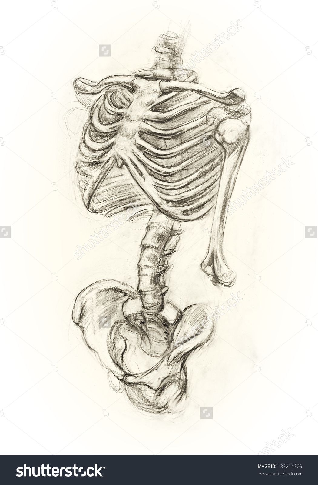 Uncategorized Skeletons Drawings stock photo learning drawing skeleton hand in pencil in