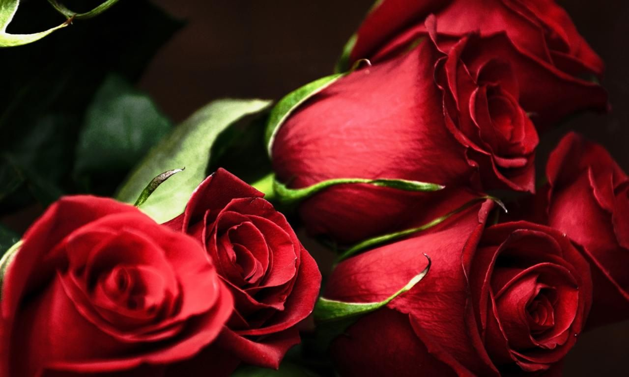 Free Download Hd Red Rose Bouquet 1440x900 Widescreen Flowers