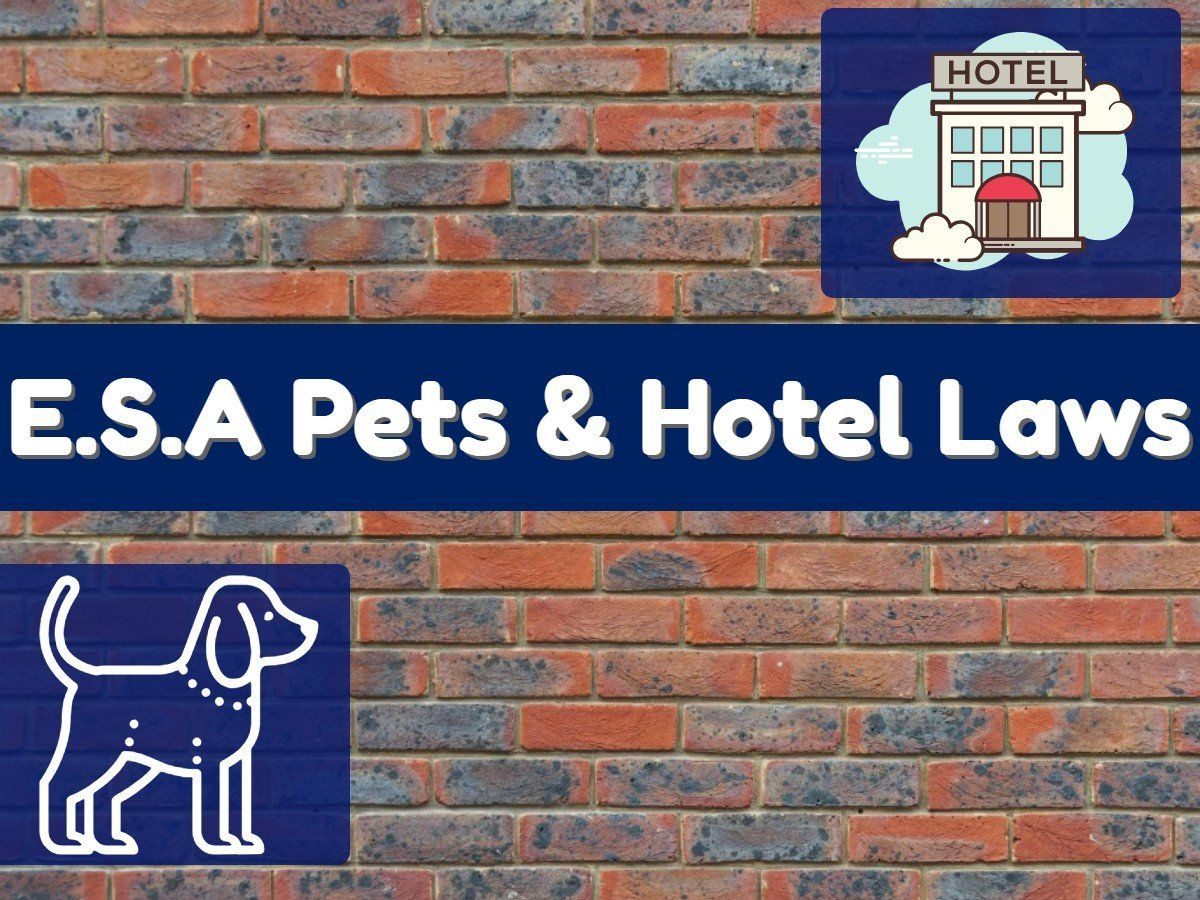 Hotel Laws for Emotional Support Animals Emotional