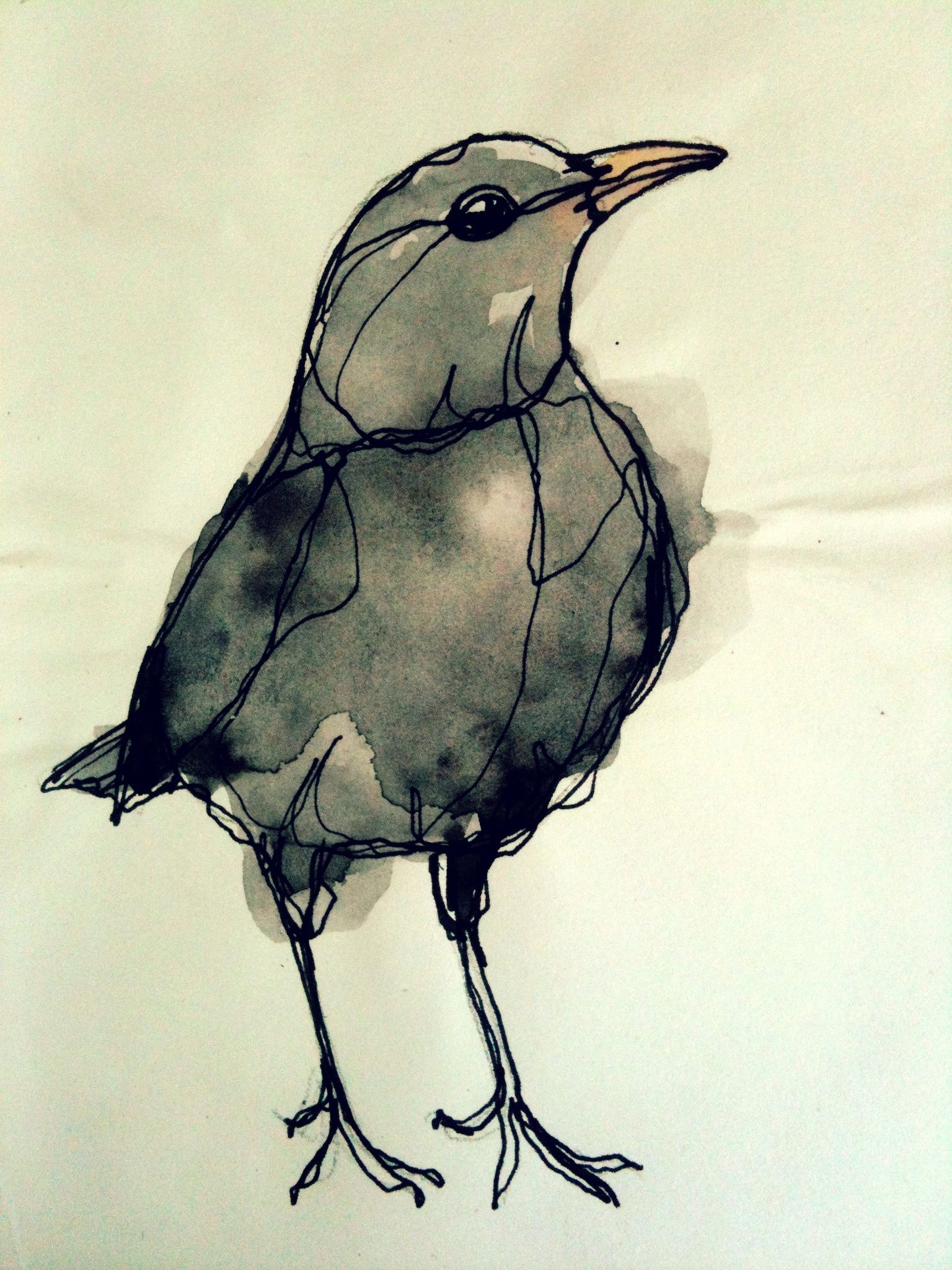 I Like This Picture Of Blackbird Because The Body Shape Proportion Is Good Recorded I Would Like To Create This Watercolor Bird Birds Painting Bird Drawings