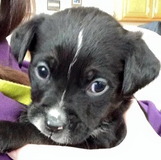Adopt Malia On Terrier Mix Dogs Pitbull Rescue Pitbull Terrier
