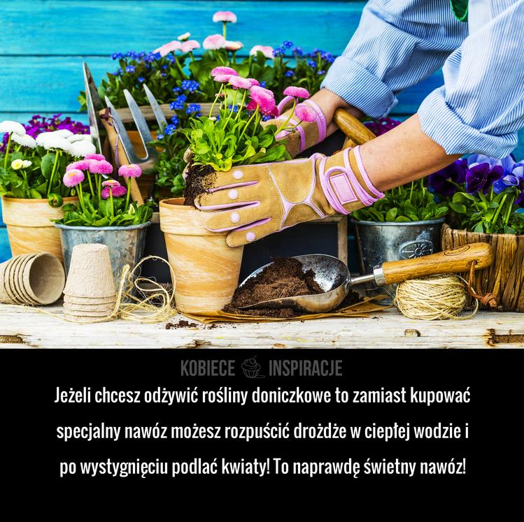 Pin On Porady Kwiaty Domowe I Ogrodowe