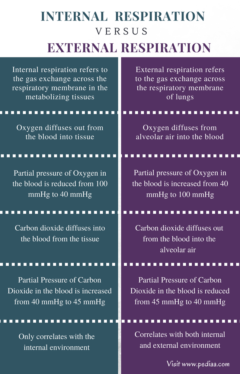 Difference Between Internal and External Respiration ...