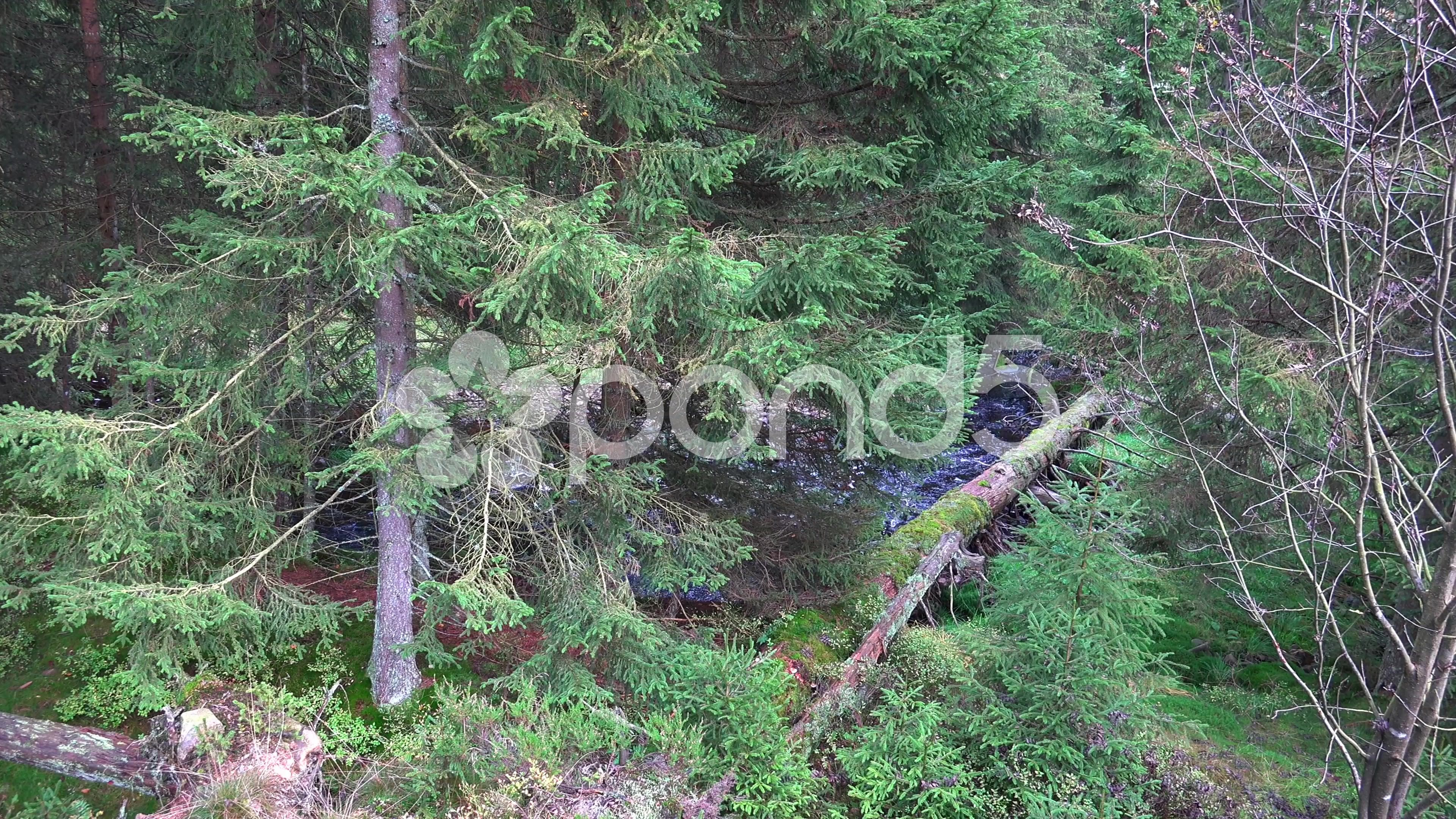 4k Moory autumn nature low mountain range Harz panning - Stock Footage   by Beckhusen