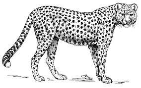 Leopard Clipart Black And White Google Search Zoo Animal Coloring Pages Jungle Coloring Pages Animal Coloring Pages