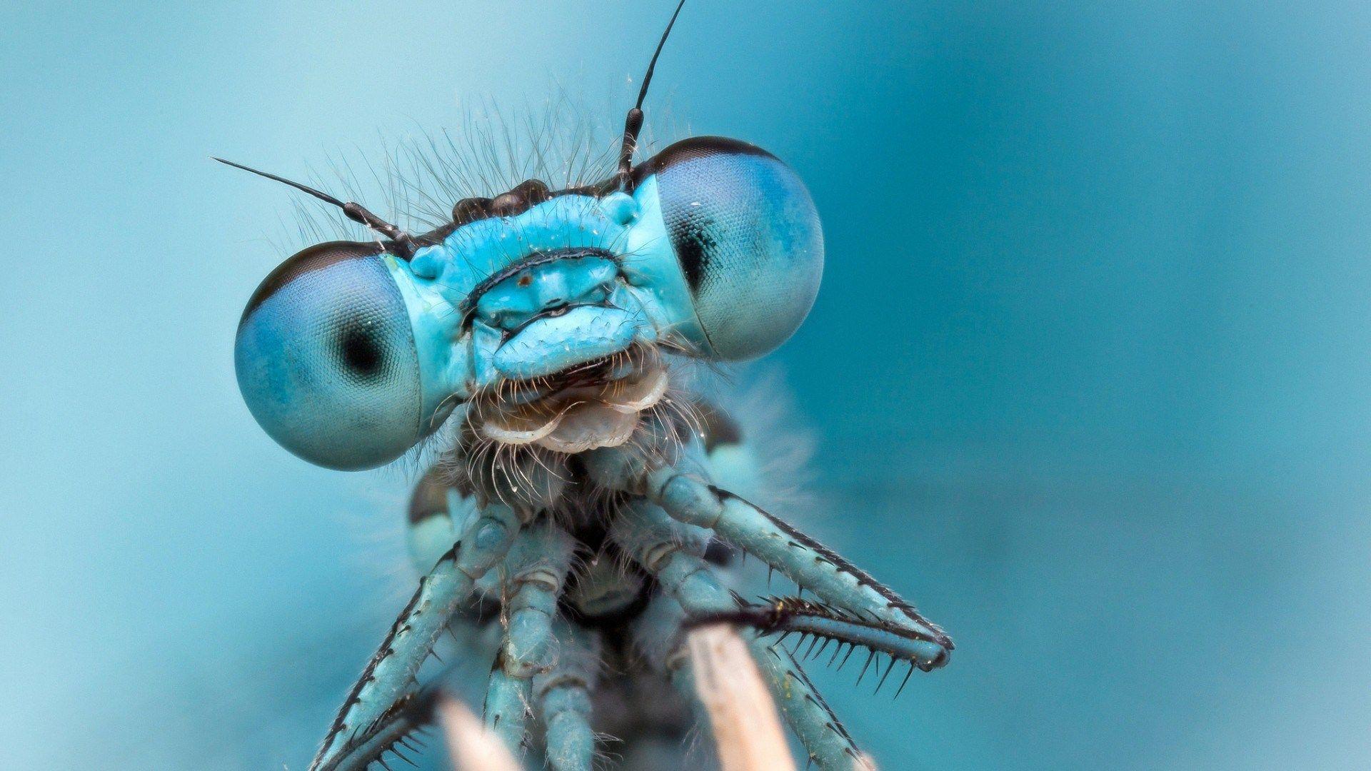 dragonfly super macro photo blue wide hd wallpaper - wpwide