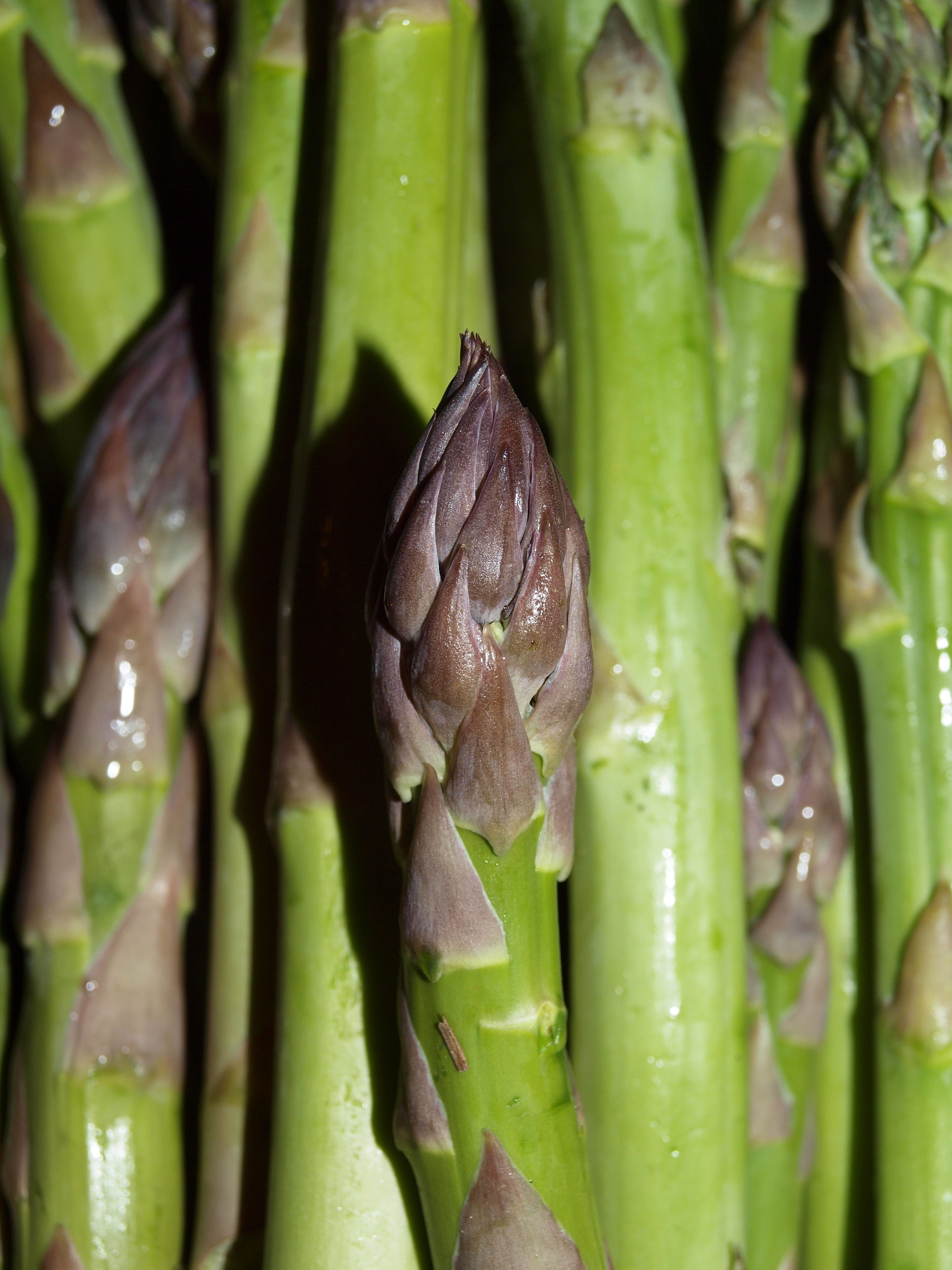 Asparagus tips, harvested and ready to eat. This crop is