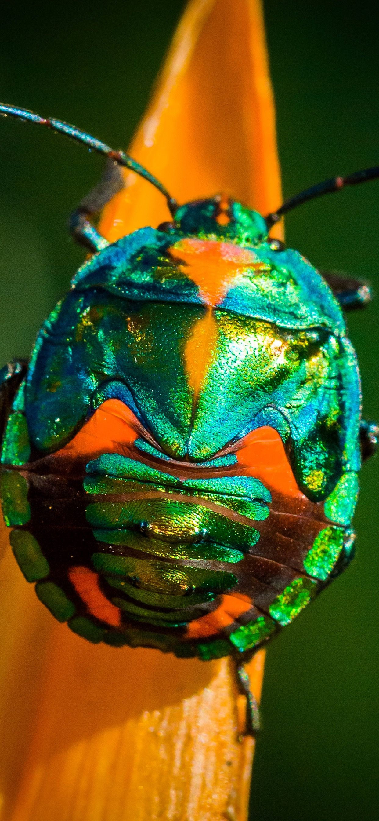 Pictures of insects image by HD Iphone Xs Max Wallpapers