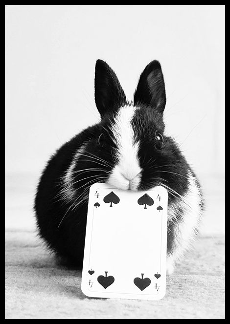 I love bunnies. And 4 is my favorite number. This photo wins the Internet. *drops mike*