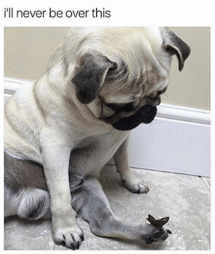 Dog Memes Of The Day 32 Pics Ep40 Dogs Dogmemes Lovelyanimalsworld Lovely Animals World In 2020 Dog Memes Dogs Cute Funny Animals