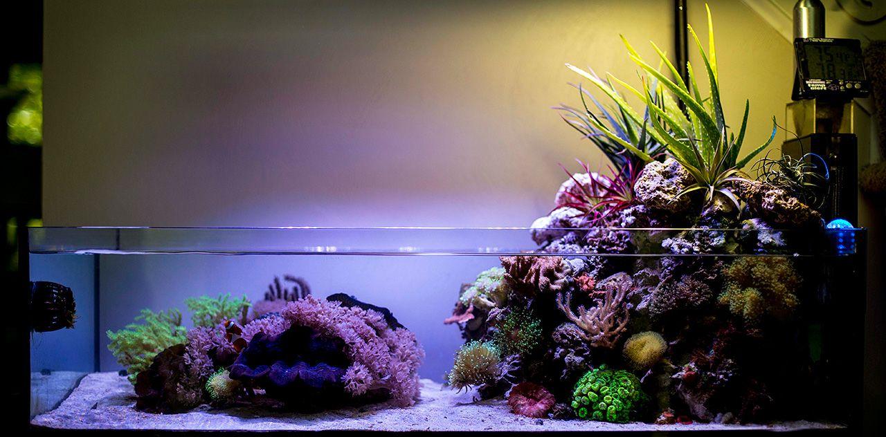Wawawang 2015 featured aquariums featured aquariums for Aquarium nano marin