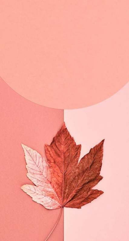 43+ ideas fall wallpaper iphone backgrounds autumn #wallpaper #fallwallpaperiphone