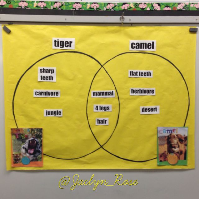 Venn Diagram For My 1st Grade Science Unit On Animals Compared And