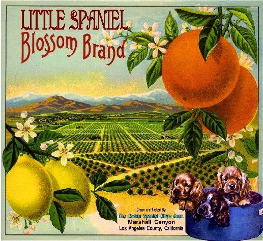 Redlands May California Poppy Orange Citrus Fruit Crate Label Art Print