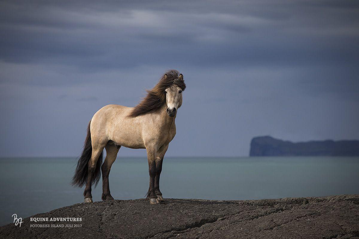 Pferdefotografie für Anspruchsvolle in München, Bayern und weltweit #koudehapjes