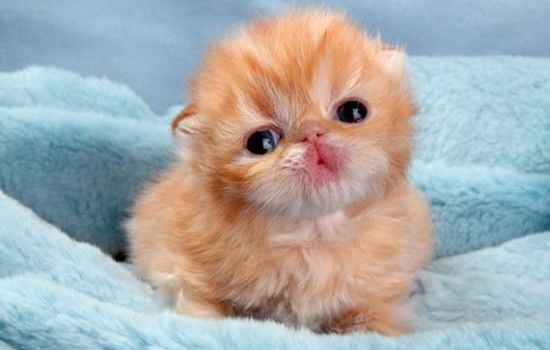 Top 10 Cutest Kittens In The World Kittens Cutest Baby Baby Animals Pictures Cute Animal Pictures