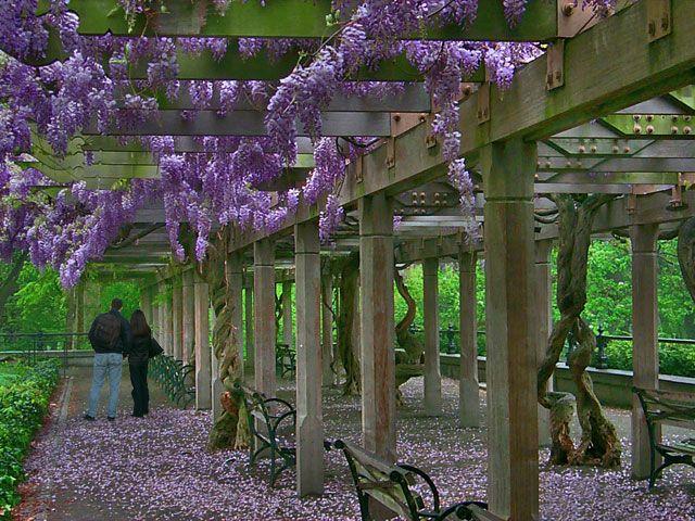 Central Park Conservatory Garden Wisteria Pergola