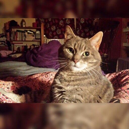 Chilling with my bestie :) #catlady #cats #ilovemycat