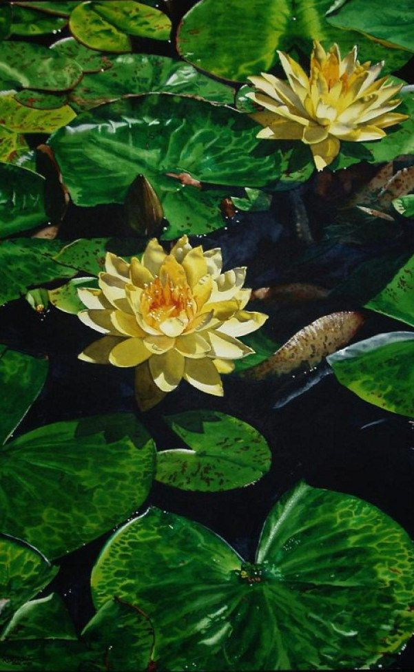 Realistic Watercolor Paintings By Kansas Artist Marlin Rotach.... I would LOVE to have prints of his paintings!!