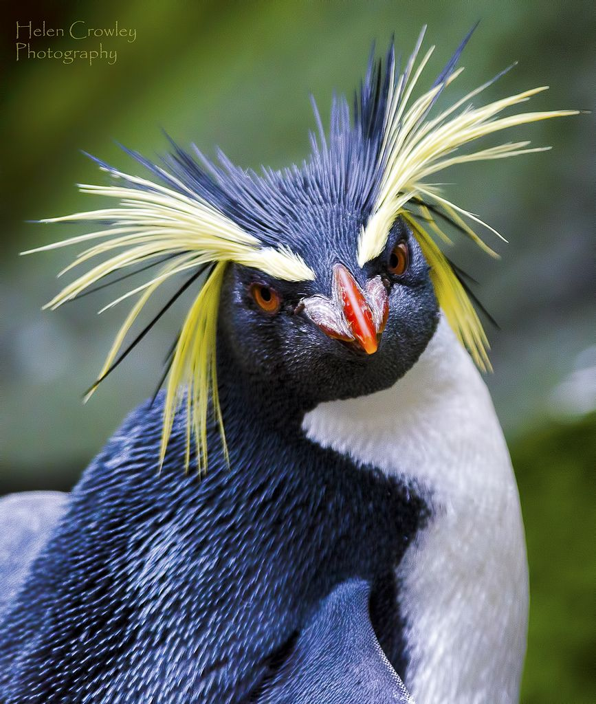 bad hair day penguin penguins-rockhopper
