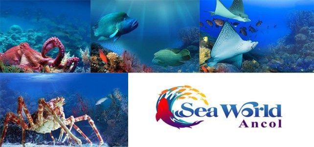 Tiket wisata seaworld ancol