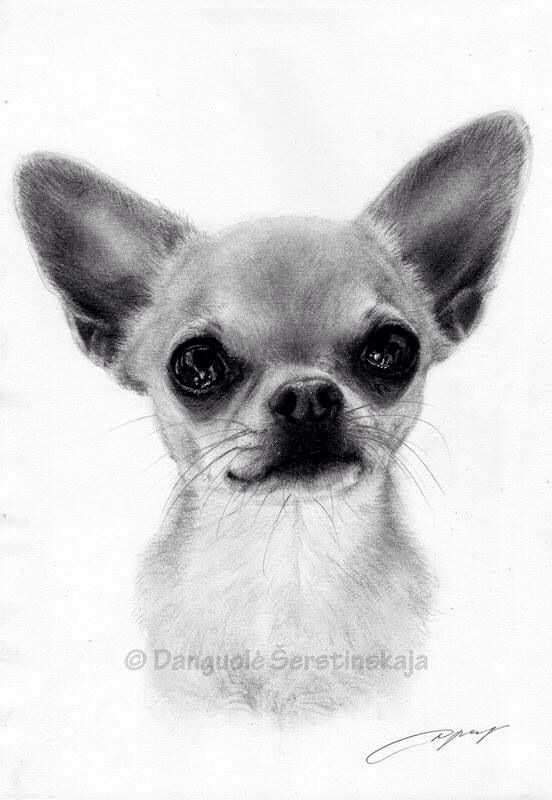 Amazing chihuahua portrait  Awesome ! We're proud you feel like it ! Let us know if you get requests at all , we're willing tohelp you : ) Here's my store ==> https://etsytshirt.com/chihuahua  #chihuahualovers #ilovemychihuahua