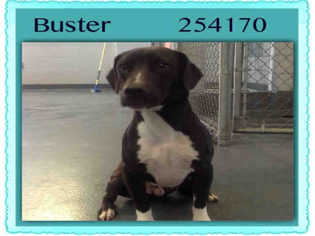 My Name Is Buster Id A254170 I Am Located In San Antonio Acs
