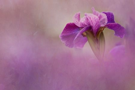 Purple Blush by Kathleen Clemons on 500px