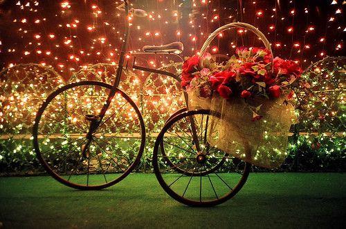 christmas, flowers, photography, romantic - inspiring picture on Favim.com