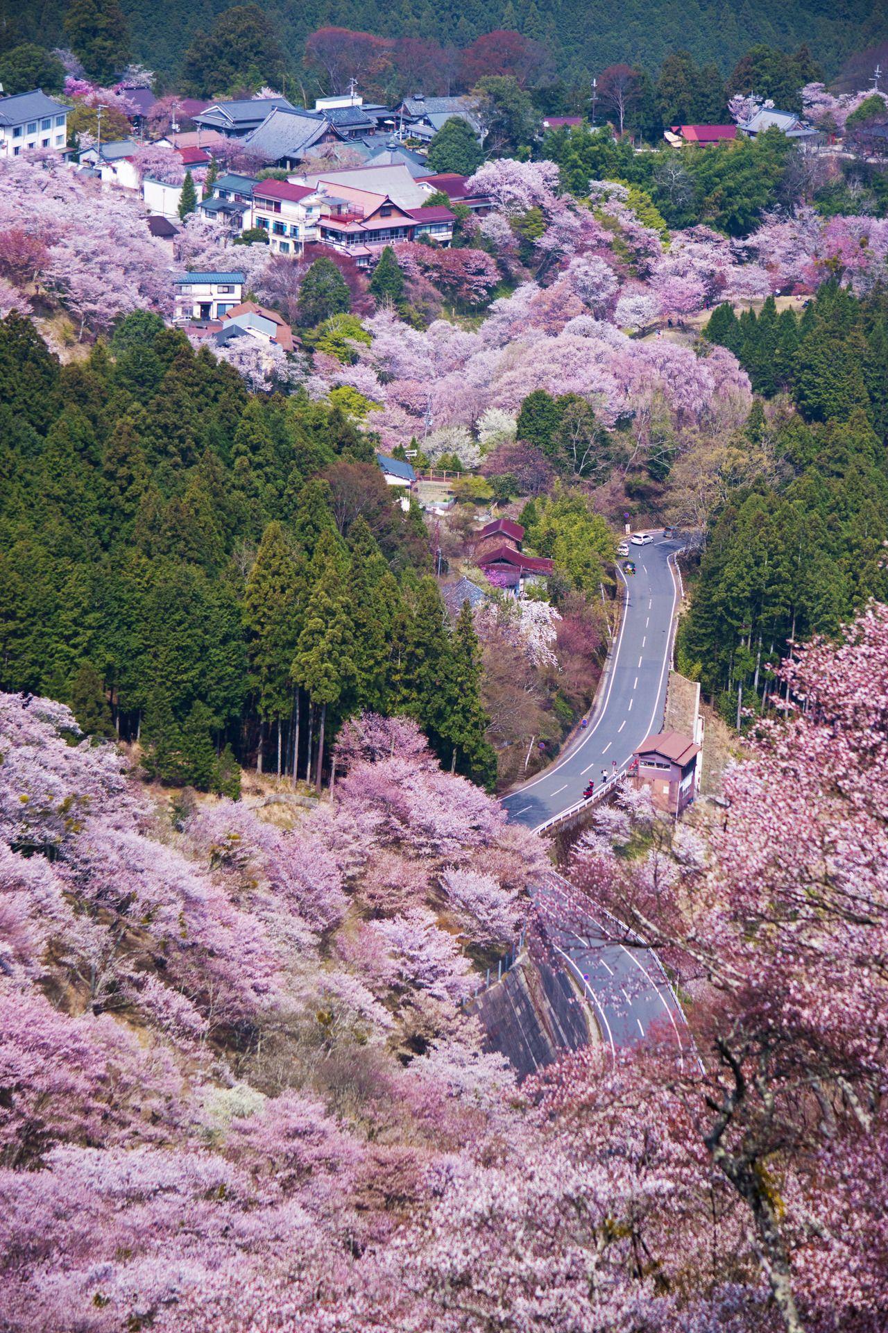Yerrr Inefekt69 Mt Yoshino Nara Japan Japan Travel Beautiful Places To Travel Nara Japan